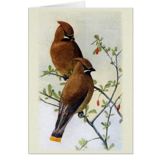 Birds and Berries Greeting Cards