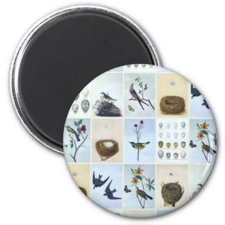 Birds and Nests - Magnet