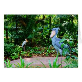 Birds at Singapore Zoo Greeting Card