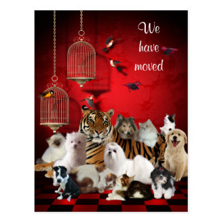 Birds & Cats and Cages Red, We moved Postcard