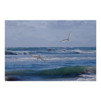 Birds diving into the ocean poster