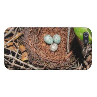 Birds eggs case for iPhone 5/5S