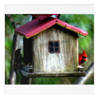 BIRDS FEEDING ACRYLIC PRINT