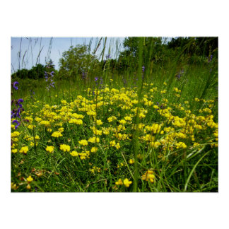 Birds-foot Trefoil Poster