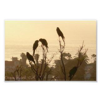 Birds In Paradise Photo Print