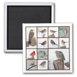 Birds in Snow Collection Magnet