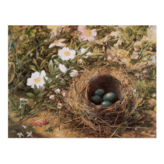 Birds Nest and Dogroses by Hill,Victorian Fine Art Postcard