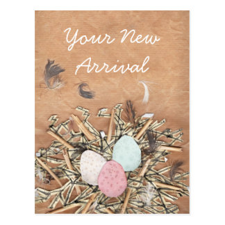 Bird's Nest Baby Greetings Postcard
