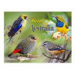 Birds of Australia