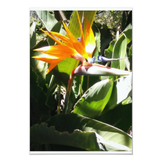 Birds of Paradise Card