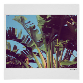 Birds of Paradise Florida 3 Poster