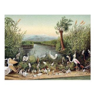 Birds of the Caucasus Postcard