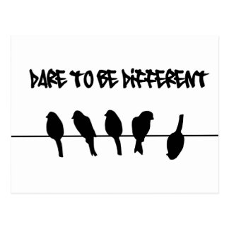 Birds on a wire – dare to be different postcard