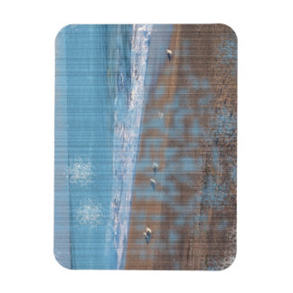 birds on beach grunged stripes shore image vinyl magnets