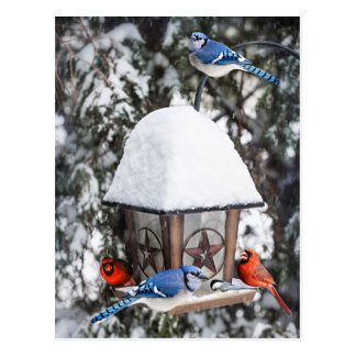 Birds on bird feeder in winter postcard