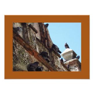 Birds on Chapel at Old San Juan Photo Print