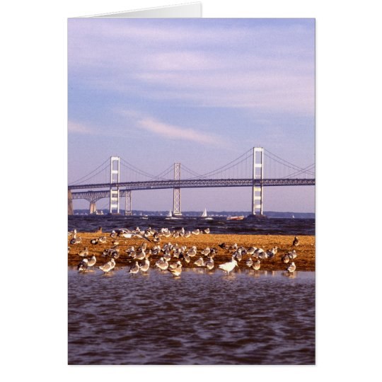 Birds on Chesapeake Bay Card