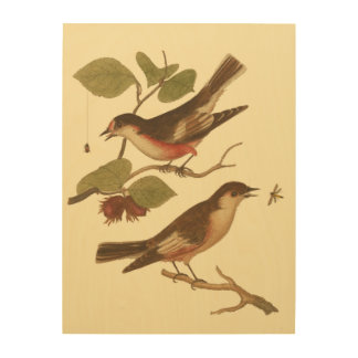 Birds Perched on Branches Eating Insects Wood Print