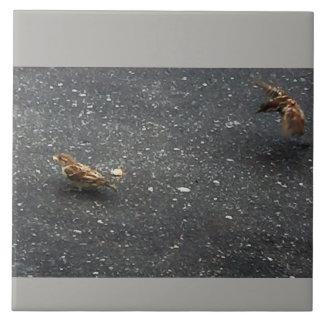 Birds Photo Tile