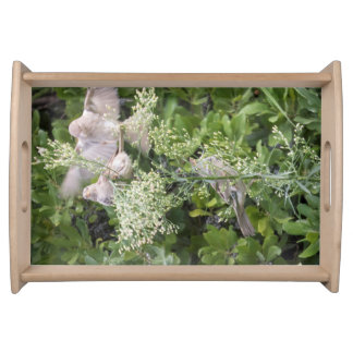 Birds & Plants Serving Tray