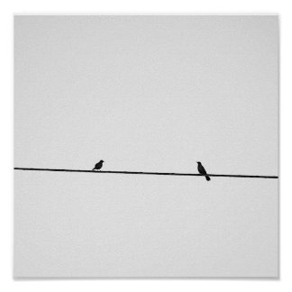 Birds put in black and white poster