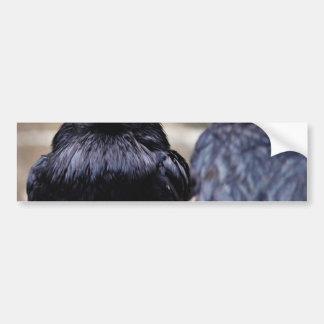 Birds Ravens Feathers Black Bumper Stickers