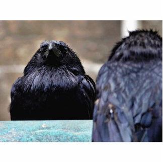 Birds Ravens Feathers Black Photo Sculptures