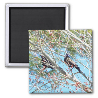 birds spring magnet