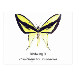 Birdwing X Butterfly with Name Postcard