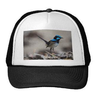 birdy birdy boo cap