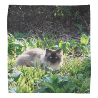 Birman Cat Bandana
