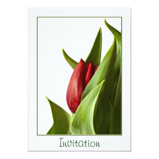 Birth of a Spring Red Tulip - Template