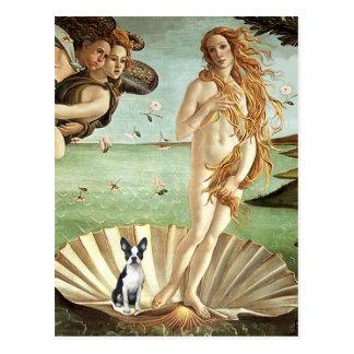 Birth of Venue Venus - Boston Terrier #1 Postcard
