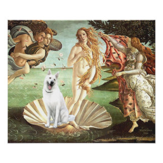 Birth of Venus-White German Shepherd Poster