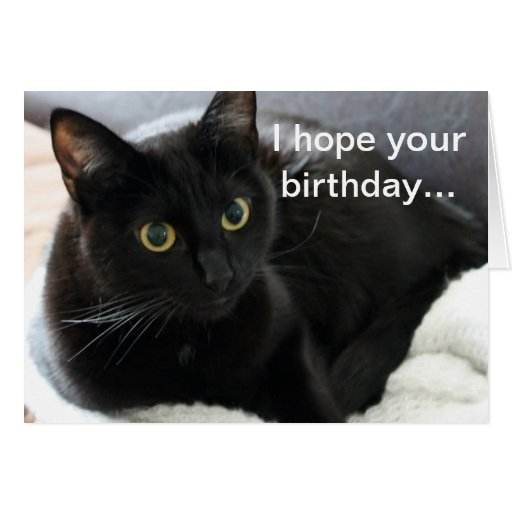 Birthday Black Cat Cards