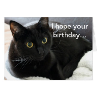Birthday Black Cat Greeting Card