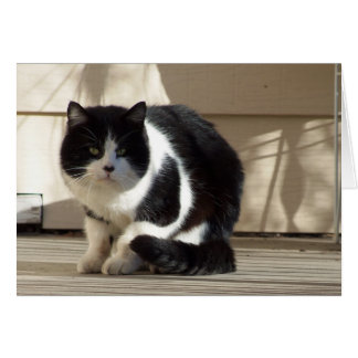 Birthday, Black N White Cat Greeting Card