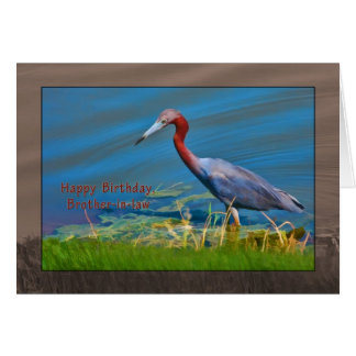 Birthday, Brother-in-law,  Little Blue Heron Bird Card