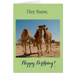 Birthday Camels Card