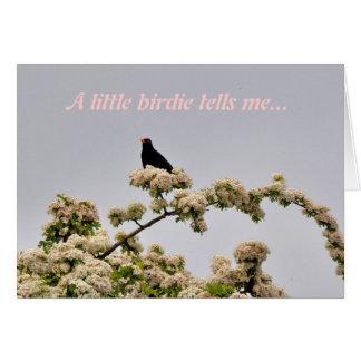 Birthday Card: Blackbird Card