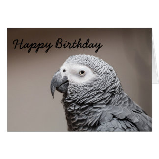 Birthday card  Congo African Grey Grey Parrot