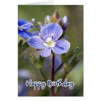 Birthday Card - Corn speedwell - Veronica arvensis