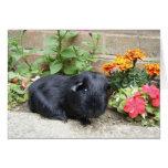 Birthday Card - Guinea Pig