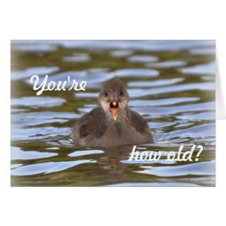 Birthday Card: Juvenile moorhen Greeting Card