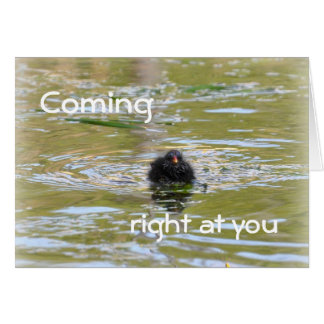 Birthday Card: Moorhen Chick Greeting Card