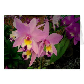 Birthday Card: Orchids with a Dream Realized Card