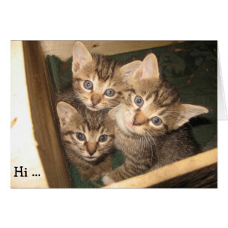 Birthday Card: Three Kittens wish a happy Birthday Greeting Card