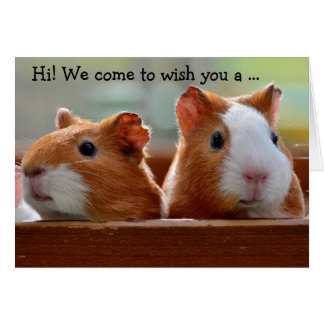 Birthday Card: Two Guinea Pigs Card
