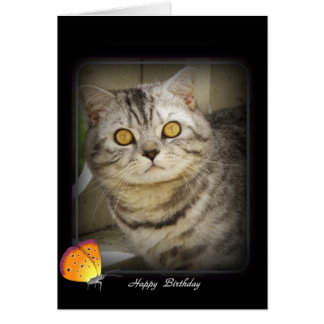 Birthday cat card