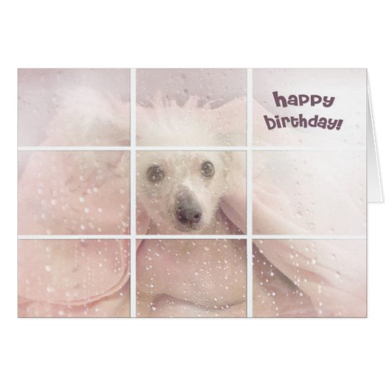 Birthday-Chinese Crested Hairless Dog Card